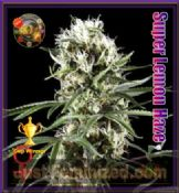 super lemon haze feminized cannabis seeds Greenhouse high thc